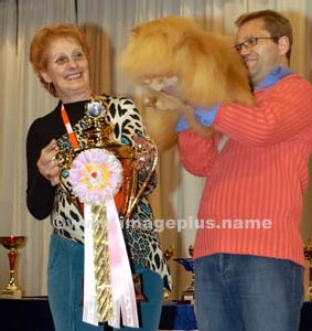 Remise du 1er prix au chat persan Caramba