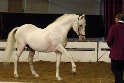 Instants Equestres 2008 - spectacle de Lucien GRUSS © Yvan Marcou